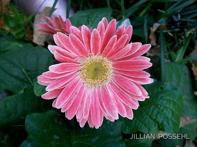 PERFECTION by JILLIAN  POSSEHL
