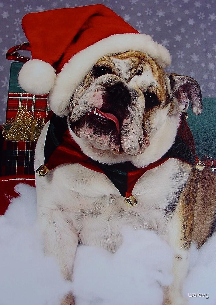 LuLu's Christmas by walevy