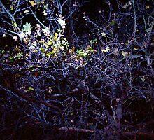 leaf by MJjunkie86