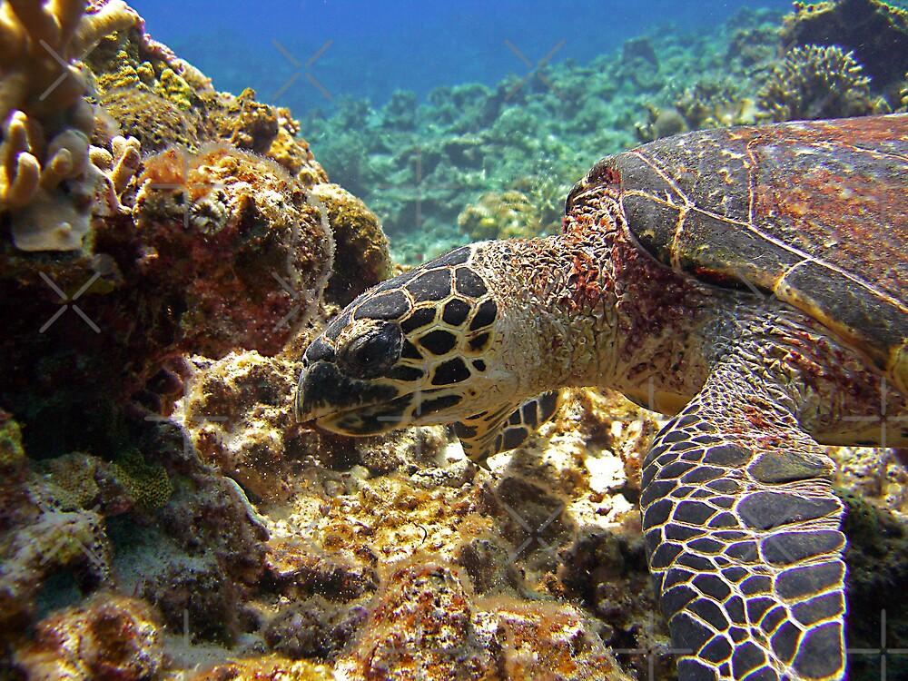 Karamas Sea Turtle by Michael Powell