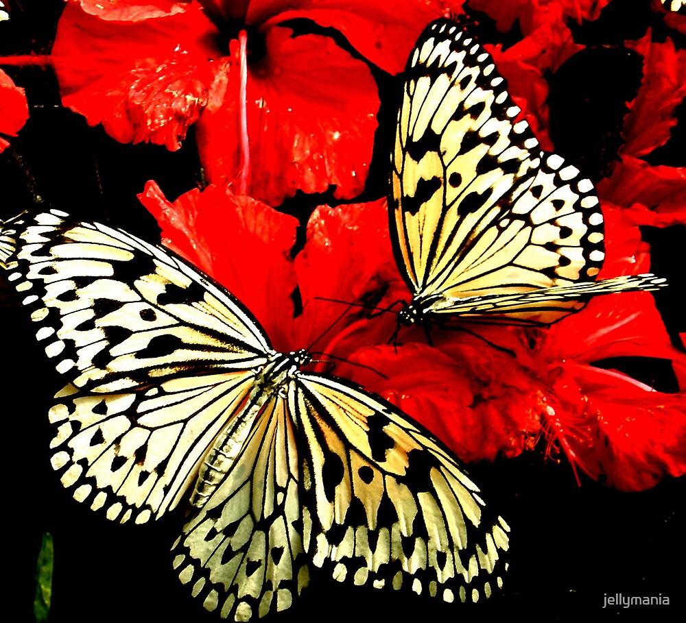 Butterflies by jellymania