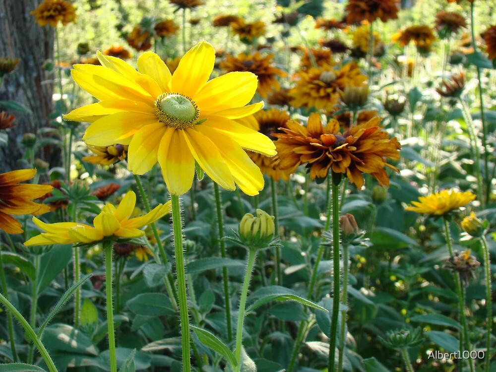 flowers by Albert1000