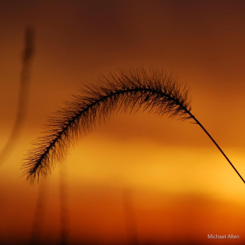 Evening is Golden... by Michael Allen