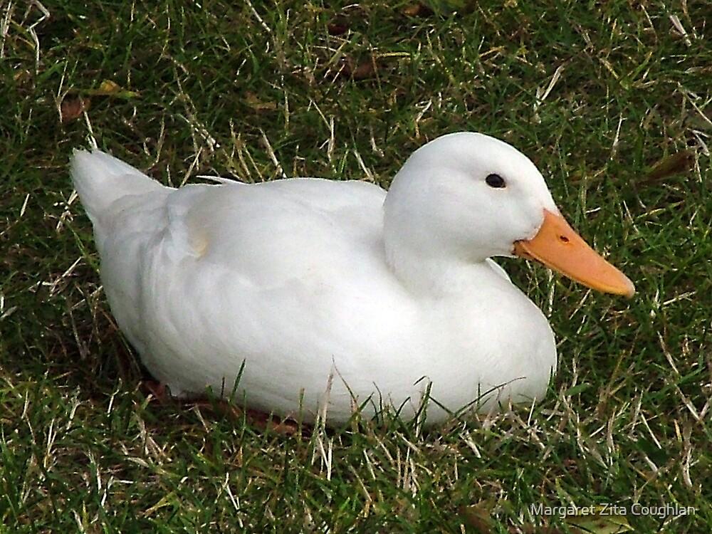 Sitting Duck by Margaret Zita Coughlan