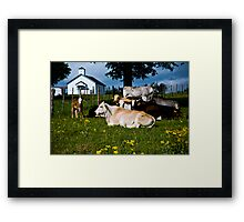 Holy Cows Framed Print