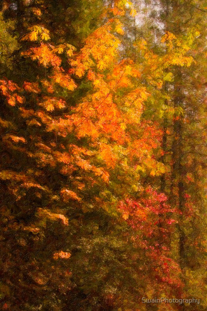 Autumn Color-Digital Impasto by SwainPhotography