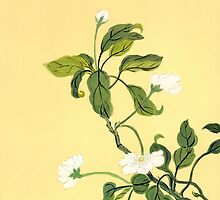 White Blossoms from Amphai by Baina Masquelier