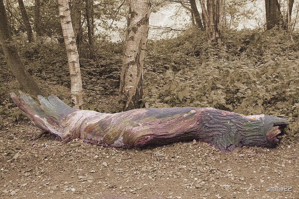 Fallen Tree (Canvas Effect) by shane22