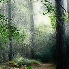 Faerie Forest by Ann Garrett