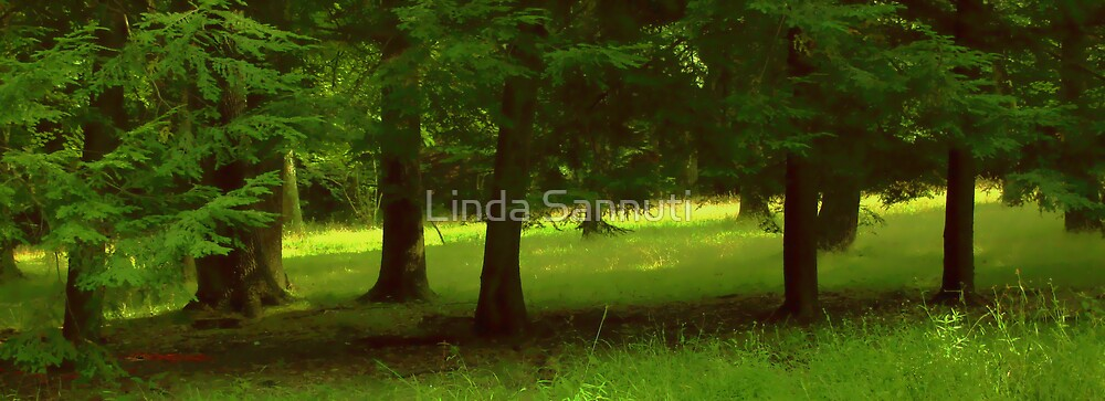 Enchanted Forest by Linda Sannuti