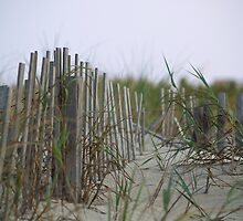 Dune Fence by digerati