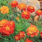 Blooms of Marigold by Hedgie's Nature & Gardening Journal