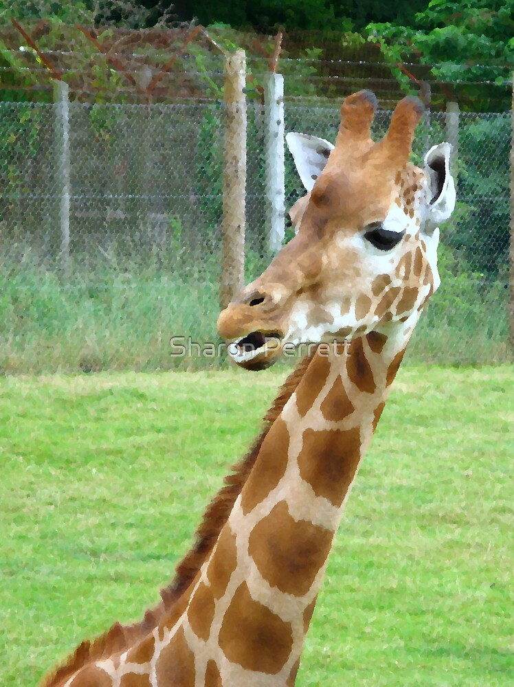 Giraffe by Sharon Perrett