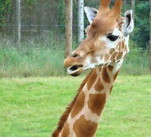 Giraffe by Sharon Perrett