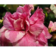 Pink Texture Photographic Print