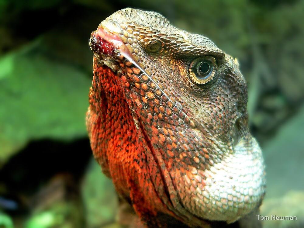 Lizard III by Tom Newman