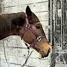 Even Horses Have Bad Hair Days by Sherry Hallemeier
