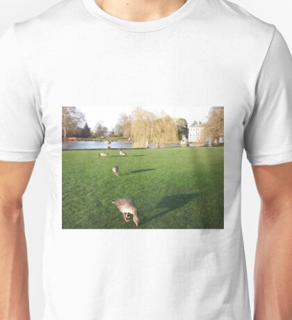 Hungry Canadian & Egyptian Geese  Unisex T-Shirt
