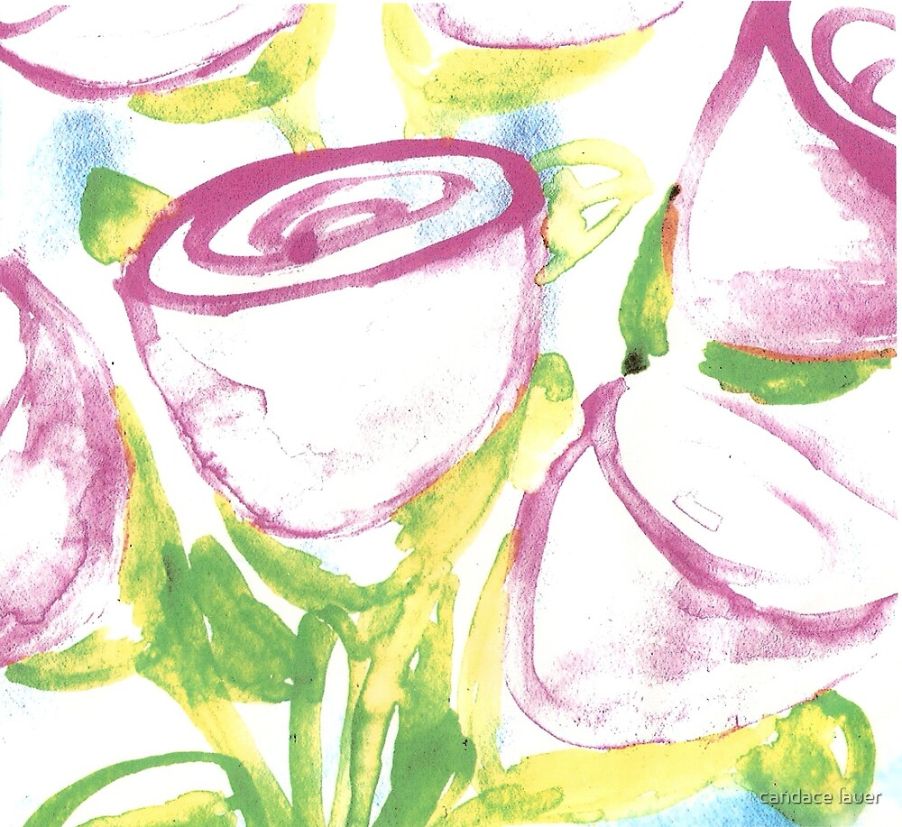 watercolor - cupped roses  by candace lauer