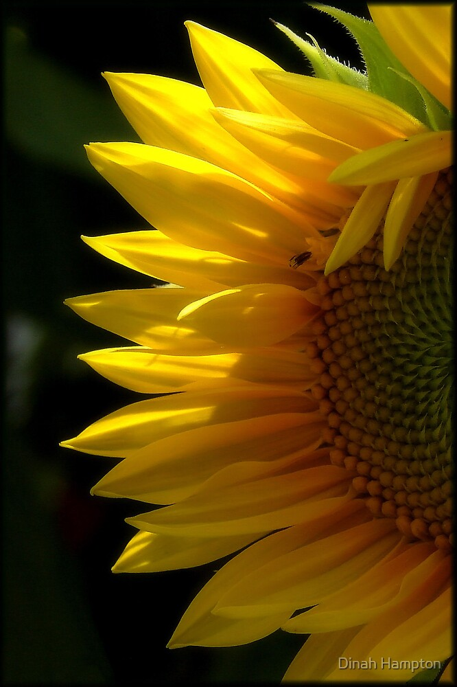 Yellow Beauty by Dinah Hampton