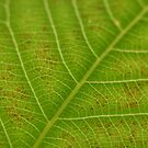 Leaf Patterns by Jeremy Harrington