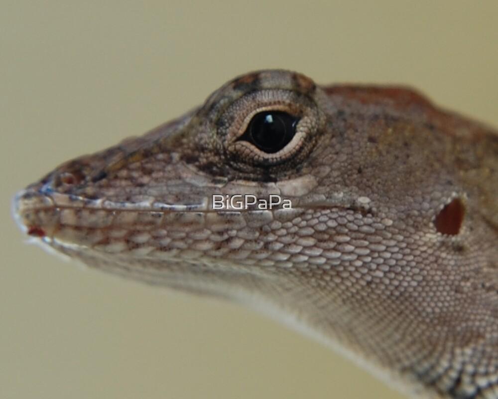 lizard up close by BiGPaPa