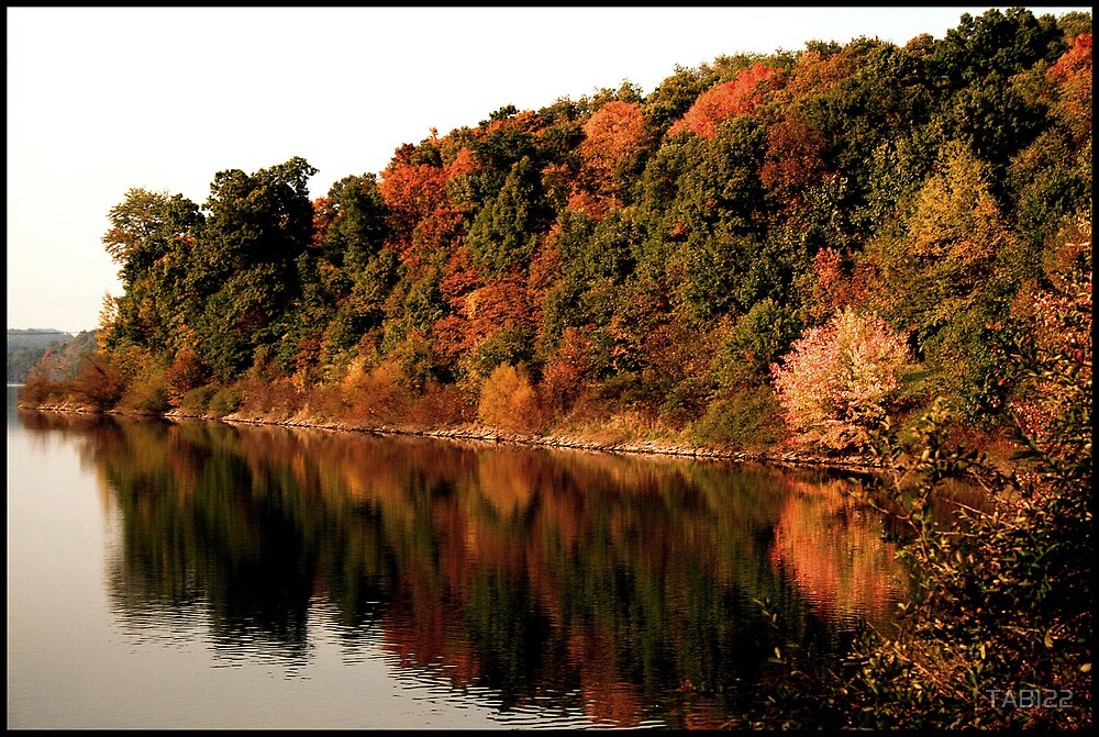 fall leaves by TABI22