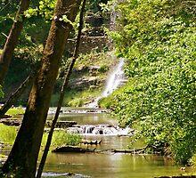 Dogwood Falls by Kat Miller