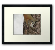 Hello There!! Framed Print
