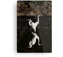 Reflective Moment - Great Egrets Metal Print