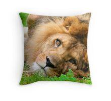 Lazy Lion Throw Pillow