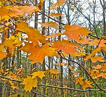 Maple Tree Autumn Foliage by MotherNature
