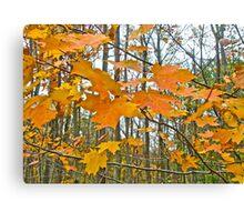 Maple Tree Autumn Foliage Canvas Print
