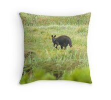 Morning Wallaby Throw Pillow