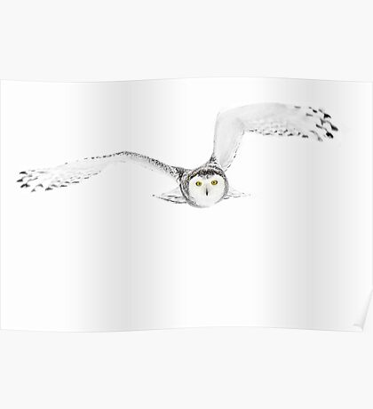Eyes on the prize - Snowy Owl Poster