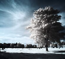 Cold Light by Gary Tumilty