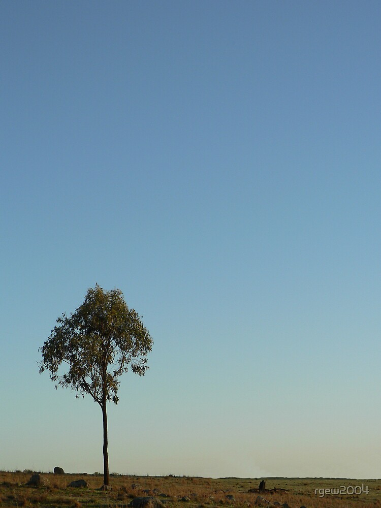 One Tree by Greg Halliday