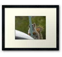 Hiding From The Camera Framed Print
