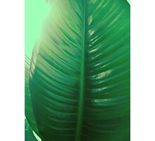 Mother Earth #2 Photographic Print