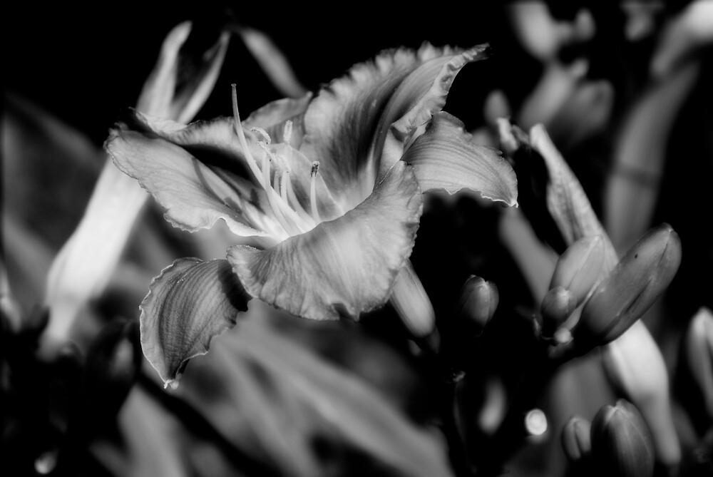 Black & White by Rod  Adams