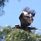 kookaburra flying by by BigAndRed