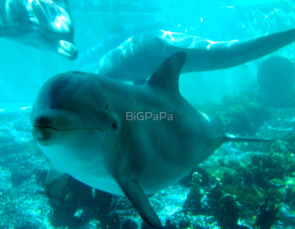 Curious Dolphin by BiGPaPa