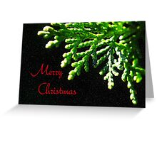 Christmas Fir Greeting Card
