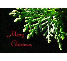 Christmas Fir Photographic Print