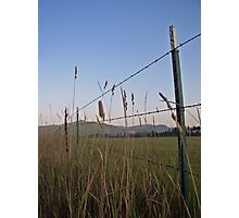 Fields of Grace Photographic Print