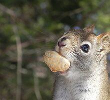 Squirrel Close Up by Martha Medford