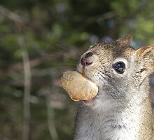 Squirrel Close Up by Martha Medford
