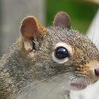 Squirrel by Martha Medford