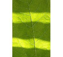 Zebra Leaf Photographic Print