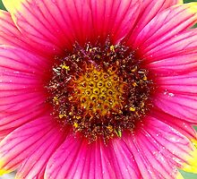 Beach Flower by TNRidrnr